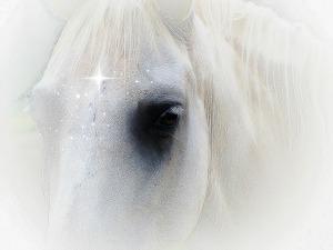 whitehorse...